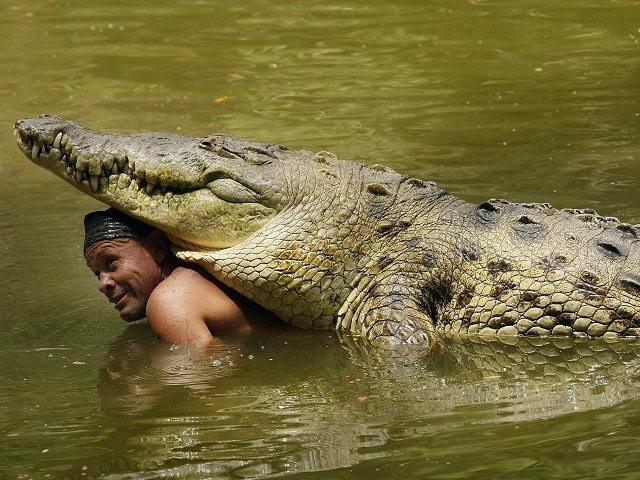 Un cocodrilo de más de 440 kilos, y casi 5 metros de largo, es mejor amigo de un pescador. Cocodriloman-640x480